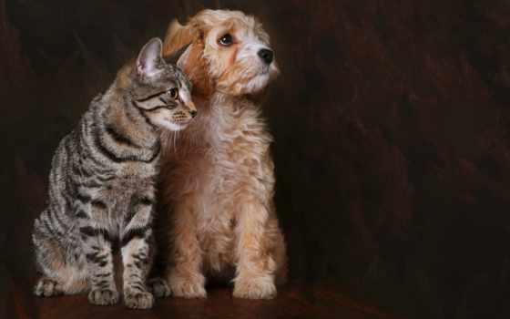 собака, кот, друзья
