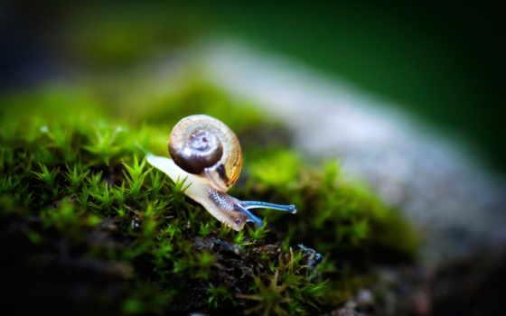 сетка, вашему, yang, snail, orang, css, rumah, вкусу, шутки,
