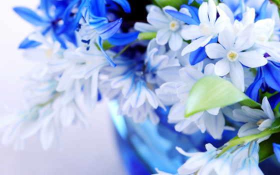 цветы, голубой