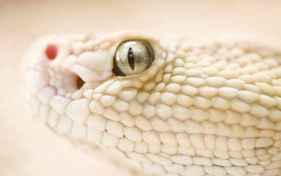 snake, белая, zhivotnye