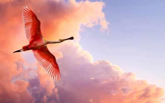 птицы, фламинго, полет