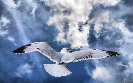птица, полет, полете