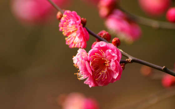весна, one, click, color, высококачествен, весной, весенние, настроения, ваше, место,