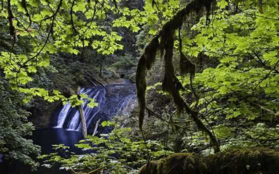 природа, тег, landscapes, страница, parte, naturaleza, туман,