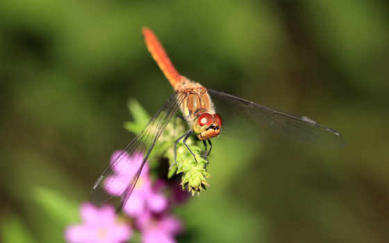 animals, cool, dragonflies,