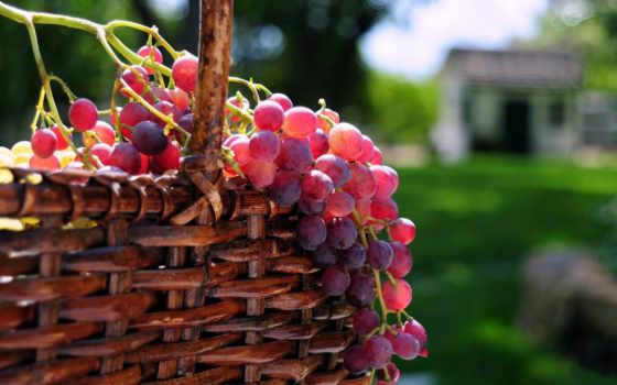 виноград, оригинал, ягоды