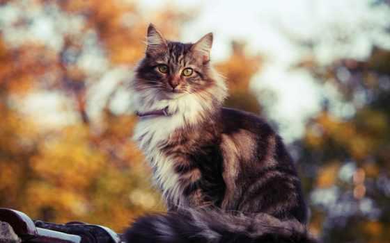 кот, кошак, кошки