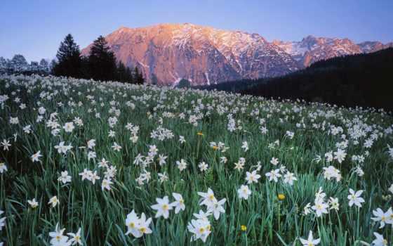 австрия, flowers, луг, поле, desktop, небо, preview, mountains,