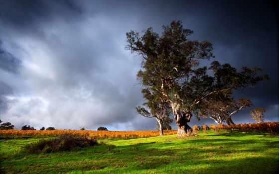 буря, ветер, тучи, поле, дерево, trees, пляж, непогода, песок, скалы, камни,