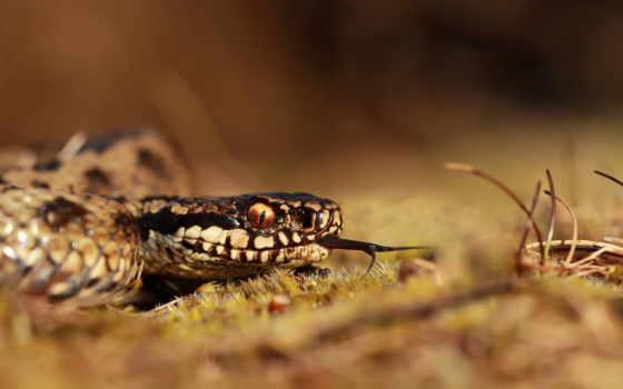 snake, трава, desktop,
