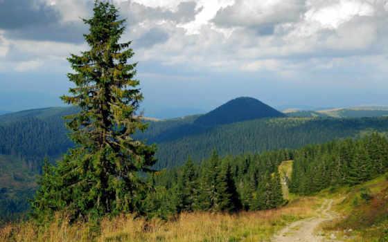 природа, ёль, лес, ученица, русс, winter, картинок, фотографий, freepik, красивый, psd,