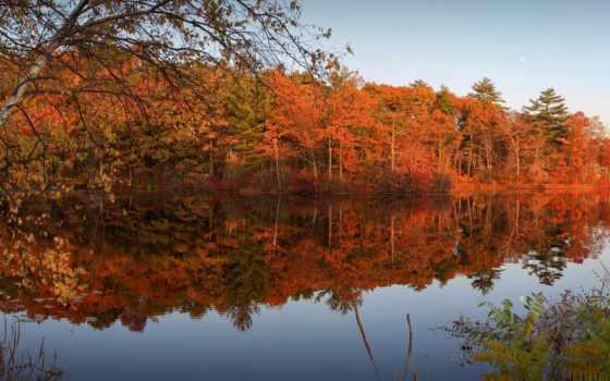 лес, ozadja, небо, desktop, trees, листья, малиновый, fondo,