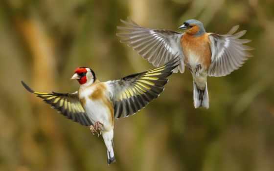 птица, коллекция, крылья, weed, goldfinch, tit
