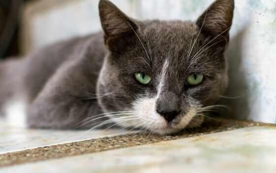кот, шляпа, cute, pet, kuce, котенок, ди, katt, id, pixabay, gato