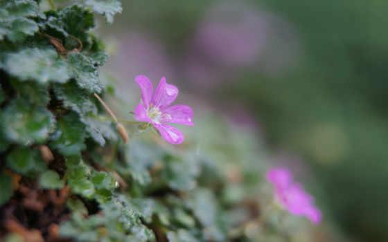 зелень, цветы