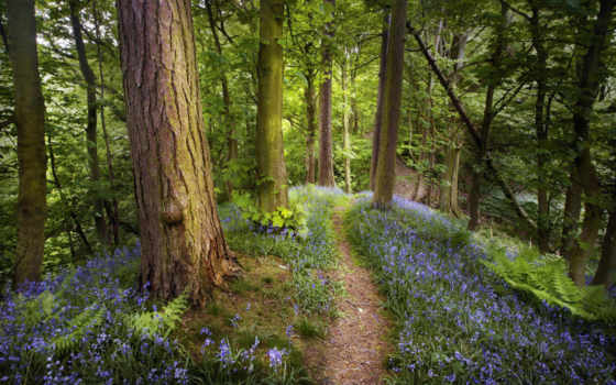 лес, летний, леса