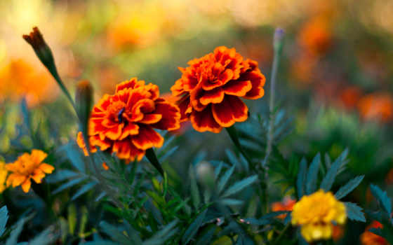 цветы, растения, pin