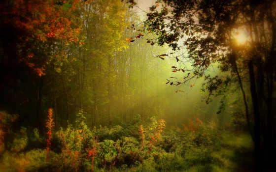 ireland, recent, самый, размытие, ирландский, туман, trees,