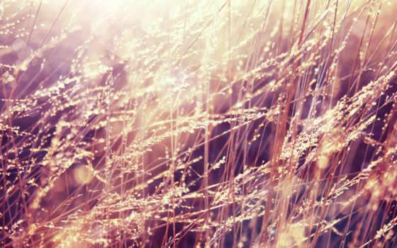 красивые, большие, природы, макро, краски, яркие,