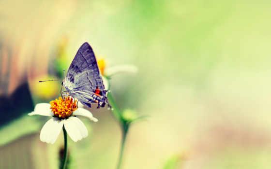 µú, butterfly