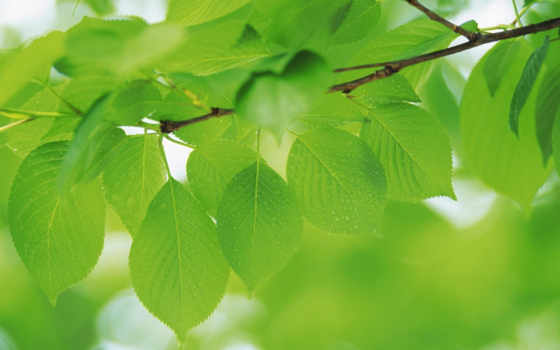 green, leaves, âìé, plants, зеленые, bidibidi,