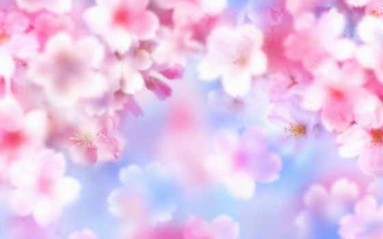 цветы, лето Фон № 31932 разрешение 1920x1080