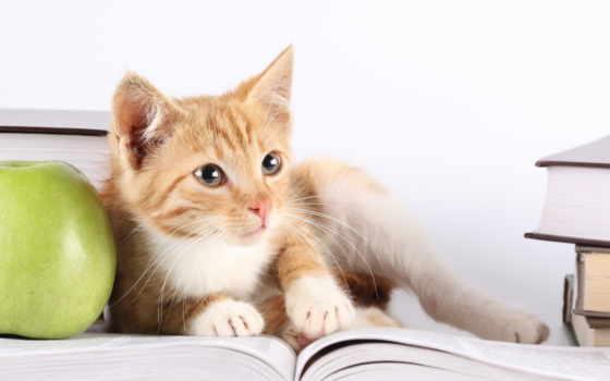 кот, книгу, читает