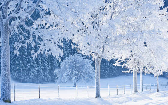 снег, les, тропинка, zima, деревя,