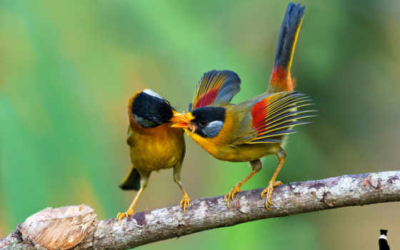 птицы, branch, zhivotnye