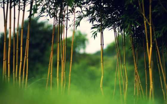 tre, cây, việt, нам, những, với, hành, tuyệt,