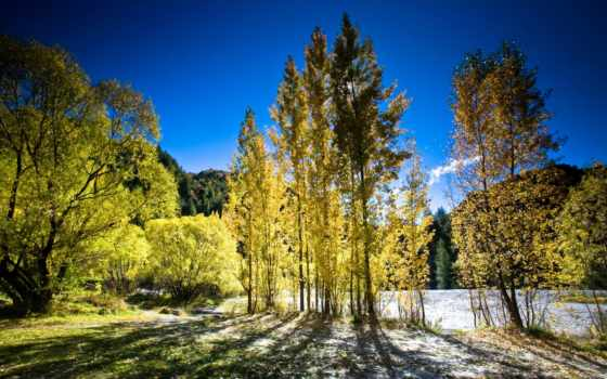 природа, favourite, картинка, новой, природы, зеландии, trees, горы, summer,