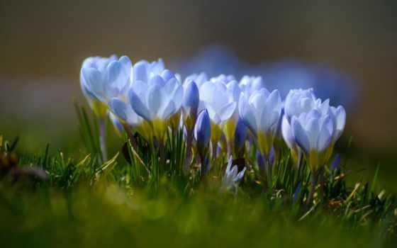 cvety, макро, весна, красивые, широкоформатные, arnusha, анвар, боке, махачкала, весенние,