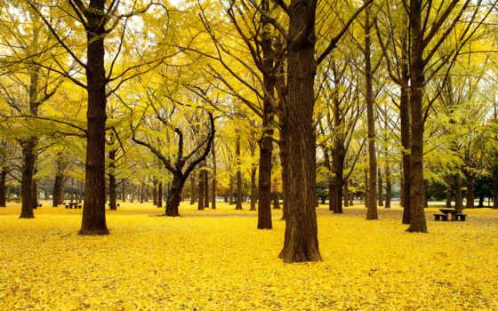 hojas, amarillas, árbol, otoño, arboleda, las, rboles, que,