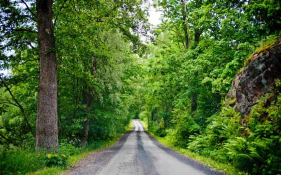 дорога, лес, trees, лесу, summer, листва, финляндия, камни,