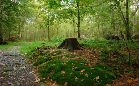 ,, лесной, растительность, природный заповедник, экосистема, дерево, лес, лист, лиственный, old growth forest, роща, temperate broadleaf and mixed forest, растительное сообщество, осень, temperate coniferous forest, тугай, mixed coniferous forest