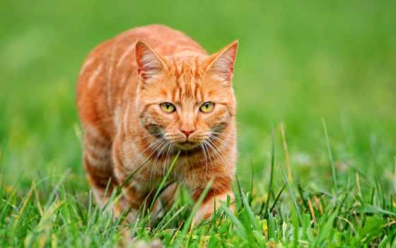 кот, red, kalendarz, ścienny, demart, коты, кошки,