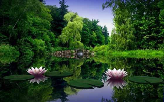 summer, цветы, красивый