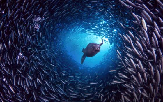 под, водой, рыб