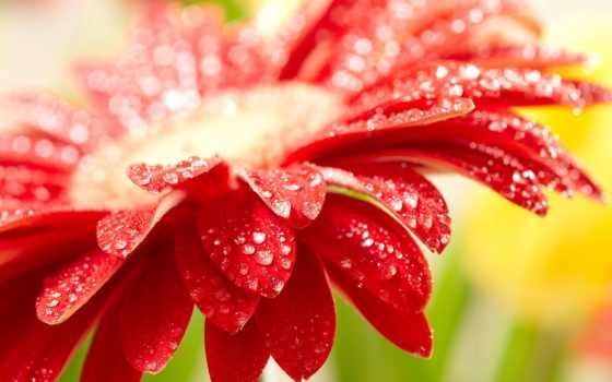 цветы, большого, разрешения