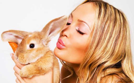 девушка, кролик, devushki, анимации, кроликом, фотообои, оранжевый,