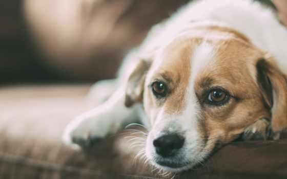 собака, you, pet, free, that, pixabay, images,