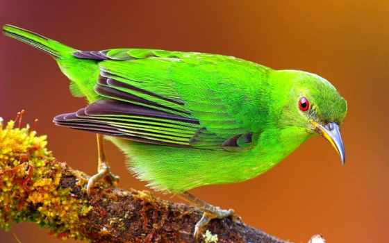 birds, fauna, рай, нашем, сайте, птица, яркий, дерево,
