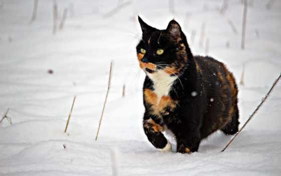 кот, снег, black, браун, white, public, domain