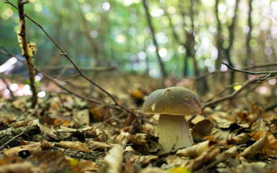 осень, природа Фон № 33568 разрешение 1920x1200