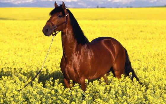 лугу, лошадь, лошади