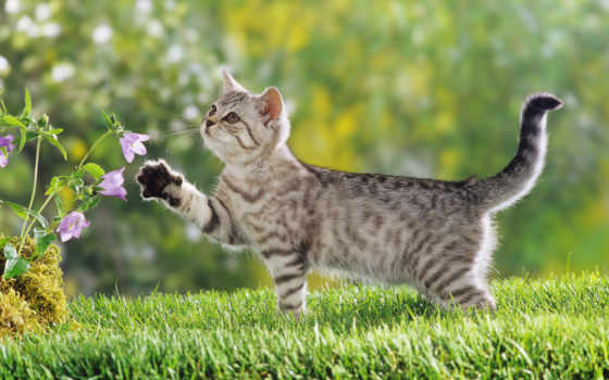 кошки, zhivotnye, скачало, кот,