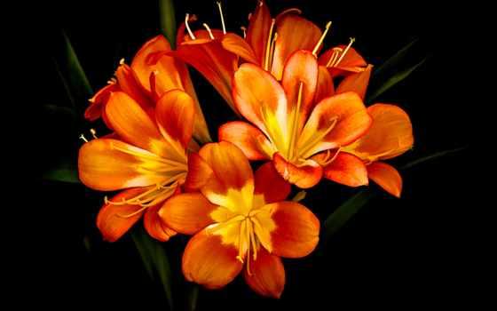 gdefon, цветы,