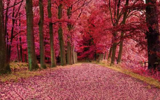 осень, нояб, осени, разрешений, количество, world, online, высоком, хорошем,