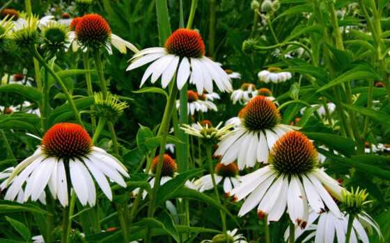цветы, down, качество, смотреть