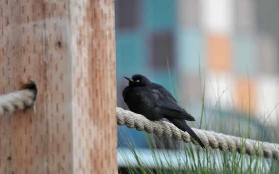 птичка на веревке